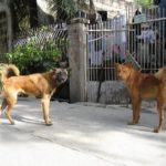 フィリピン旅行者必見!海外で野犬、野良猫に接触時の狂犬病対処法!