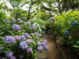 鶴舞公園の「花まつり」