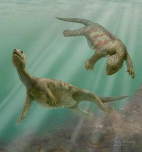 カメの祖先