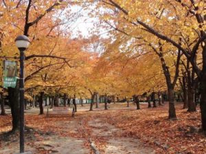 長居公園4